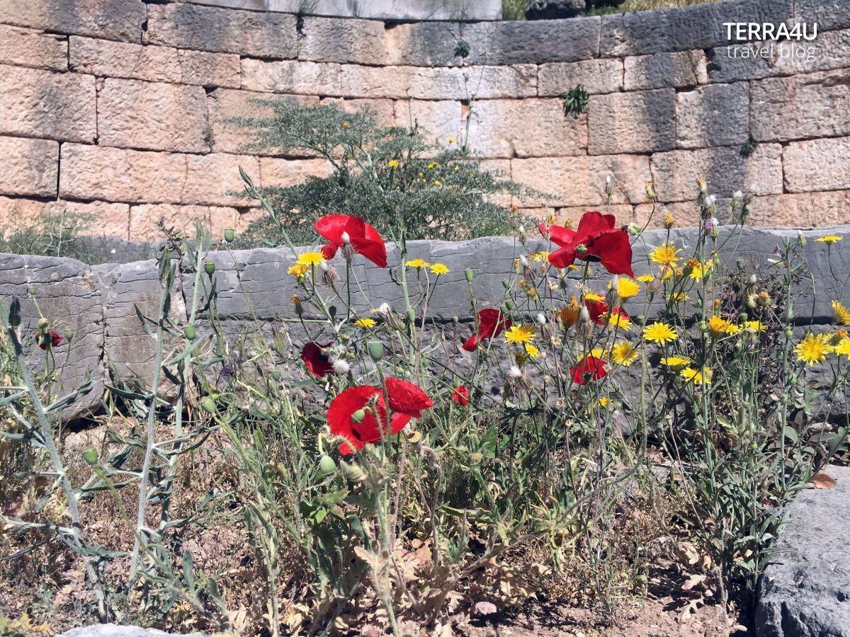 Комплекс античного храма Аполлона